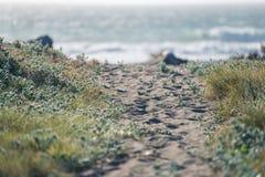 Fußweg in den Dünen auf dem Strand lizenzfreies stockfoto