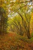 Fußweg, der das Holz durchläuft Lizenzfreie Stockfotografie