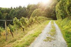 Fußweg an der Weinberglandschaft Lizenzfreie Stockfotos