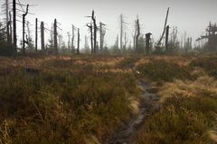Fußweg, der zu toten nebelhaften Wald führt Lizenzfreie Stockfotografie