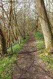 Fußweg durch die Bäume Stockfotos