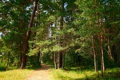 Fußweg durch einen grünen Wald mit alten Bäumen Stockfotos