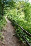 Fußweg durch einen Wald Lizenzfreies Stockfoto