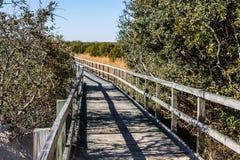 Fußweg durch Laub am hinteren Bucht-Staatsangehörig-Schutzgebiet stockfotos