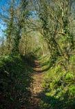 Fußweg durch typisches britisches englisches Waldland im Frühjahr lizenzfreie stockfotografie