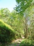 Fußweg durch Wald von Asturien Stockfotos
