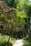 Fußweg in einem dichten grünen Wald an einem sonnigen Tag stockbild
