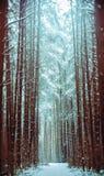 Fußweg in einem Snowy-Koniferenwald Lizenzfreies Stockfoto