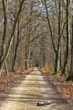 Fußweg in einem Wald Stockfotografie