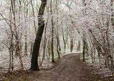 Fußweg in einem Wald im Winter mit Schnee lizenzfreies stockfoto