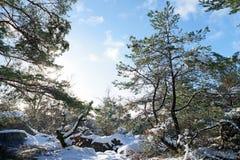 Fußweg Gorges de Franchard unter Schnee in Fontainebleau-Wald lizenzfreies stockfoto