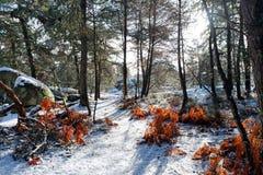 Fußweg Gorges de Franchard unter Schnee in Fontainebleau-Wald lizenzfreies stockbild