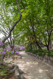 Fußweg hinter dem Deoksugungs-Palast in Seoul Lizenzfreie Stockfotos