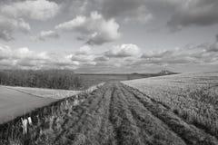 Fußweg im Ackerland Stockfotografie