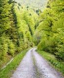 Fußweg im grünen Wald Stockfotografie