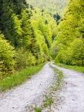 Fußweg im grünen Wald Lizenzfreie Stockbilder