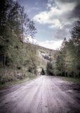 Fußweg im grünen Wald Lizenzfreies Stockbild