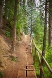 Fußweg im Holz Lizenzfreie Stockfotos