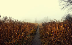 Fußweg im Nebel Lizenzfreie Stockbilder