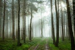 Fußweg im nebeligen Wald am Sonnenaufgang Stockfotografie