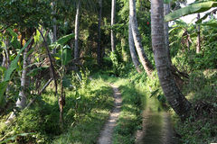 Fußweg im Palmenwald und klarer Fluss in der Landschaft in Bali Stockfotografie