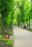 Fußweg im Park mit großen Bäumen Stockfotografie