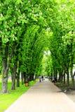 Fußweg im Park mit großen Bäumen Stockfotos