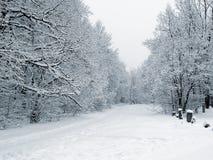 Fußweg im schneebedeckten Holz Lizenzfreies Stockfoto