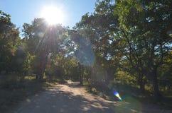 Fußweg im Sommerwald, Blendenfleck Lizenzfreie Stockfotos