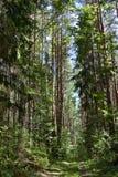 Fußweg im Wald Stockbild