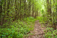Fußweg im Wald Stockfotografie
