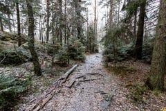 Fußweg im Wald Lizenzfreies Stockfoto