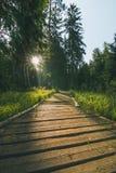 Fußweg im Wald lizenzfreie stockfotografie