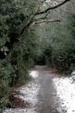 Fußweg im Winterholz mit hellem Schnee und Stechpalme stockfotografie