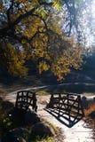 Fußweg mit hölzerner Brücke und von hinten beleuchtetem Baum Stockbilder