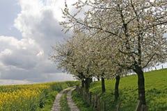 Fußweg mit Rapsfeld, Deutschland Stockbild