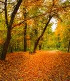 Fußweg und eine Holzbank in einem Park im Herbst stockfotografie