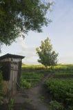 Fußweg zu einer Birke durch eine alte Toilette im Dorf Lizenzfreies Stockbild