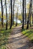 Fußweg zum See lizenzfreie stockbilder