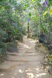 Fußweg zwischen Bäumen im Berg stockbild