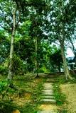 Fußweg zwischen grünem Baum im Dschungel Lizenzfreies Stockbild