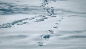 Fu?drucke auf Schnee lizenzfreie stockbilder