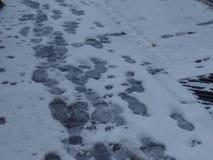 Fu?drucke im Schnee lizenzfreie stockbilder