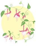 Fuchsia дизайн Стоковая Фотография RF
