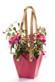 Fuchsia photos stock