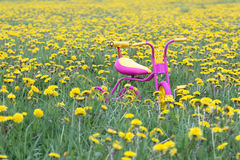 Fuchsia color kids tricycle with yellow plastic wheels and steel frame at dandelion flowers meadow Royalty Free Stock Photography