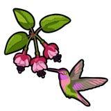 Fuchsia en het flard van het kolibrieborduurwerk Royalty-vrije Stock Fotografie