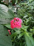 Fuchsia flower in green Royalty Free Stock Photos