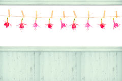 Fuchsia Flower Heads Stock Photography