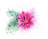 Fuchsia Flower Stock Images